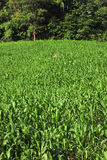 Rows and Rows of fresh plants Royalty Free Stock Photo
