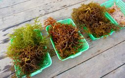 Rows of seaweed. On wooden table Stock Photography