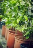 Rows of seedlings Stock Photo
