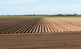 Rows of soil in a Dutch landscape Stock Images