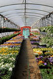 Rows of Springtime flats in greenhouse ready for planting Royalty Free Stock Photos