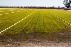 Rows Of Sprinklers & Pipes On Newly Planted Field stock images