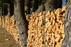 Rows of stacked chopped firewood Stock Images