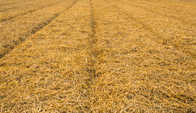Rows of straw Stock Photos