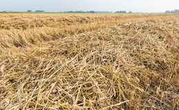 Rows of straw and stubble Royalty Free Stock Images