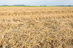 Rows of straw and stubble Stock Photography