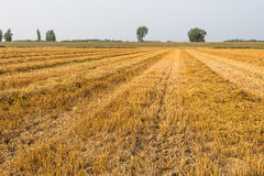Rows of straw and stubble Royalty Free Stock Photography