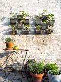Rows of strawberry plants in a vertical garden hanging on a wall stock photo