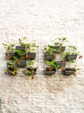 Rows of strawberry plants in a vertical garden hanging on a wall royalty free stock photos