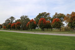 Rows of sugar maple trees in Kansas City. Row of sugar maple trees along the memorial mall south of the world war one memorial in Kansas City Missouri showing royalty free stock photo
