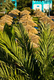 Rows of sunshades Royalty Free Stock Photos