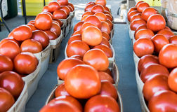 Rows of tomato baskets at outdoor farmer's market Stock Photo