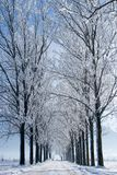 Rows of trees Stock Photography