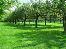 Rows of trees at Brooklyn Botanic Garden Royalty Free Stock Photo