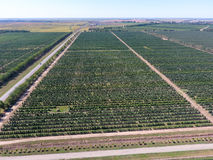 Rows of trees in the garden. Aerophotographing, top view. Stock Image