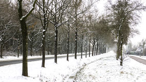 Rows of Trees in Snow. A view fro rows of trees after snow in Assen, Netherlands - January 2016 Royalty Free Stock Photos