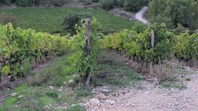 Rows of vines and fields on the hills in the lands of winemakers. Nature stock footage