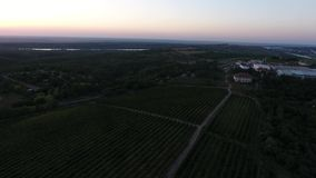 Rows of vineyard at dusk. Rows of vineyard before harvesting in Dobrogea, Romania Europe, aerial view from drone stock video