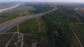 Rows of vineyard at dusk. Rows of vineyard before harvesting in Dobrogea, Romania Europe, aerial view from drone stock footage