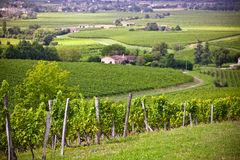 Rows of Vineyard Fields in Southern France Stock Photo