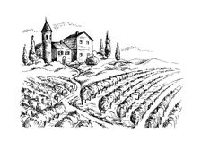 Rows of vineyard grape plants and castle. In graphic style, hand-drawn vector illustration Stock Images