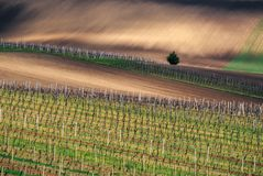 Vineyard over town Velke Bilovice, South Moravia, Czech republic Stock Photography