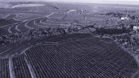 Aerial drone view over vineyard hills