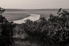 Danube river and rows of vineyard before harvesting Royalty Free Stock Image