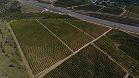 Rows of vineyard before harvesting. In Dobrogea, Romania Europe, aerial view from drone, Highway crossing the fields Stock Images