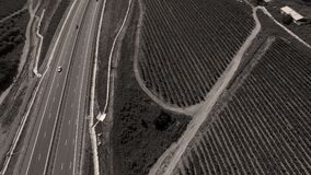 Rows of vineyard before harvesting. In Dobrogea, Romania Europe, aerial view from drone, highway Royalty Free Stock Image