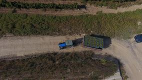 Truck among rows of vineyard before harvesting. Rows of vineyard before harvesting in Dobrogea, Romania Europe, aerial view from drone. Truck driving through stock footage