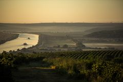 Rows of vineyard before harvesting, drone view. Rows of vineyard before harvesting in Europe, aerial view from drone, Danube river in the foreground Stock Photo