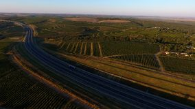 Rows of vineyard before harvesting, drone view Royalty Free Stock Images