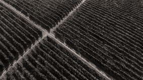 Rows of vineyard before harvesting. In Dobrogea, Romania Europe, aerial view from drone Stock Photography