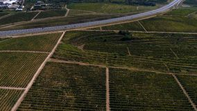Rows of vineyard before harvesting. In Dobrogea, Romania Europe, aerial view from drone, Highway crossing the fields Royalty Free Stock Photography