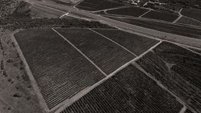 Rows of vineyard before harvesting. In Dobrogea, Romania Europe, aerial view from drone, Highway crossing the fields Stock Image
