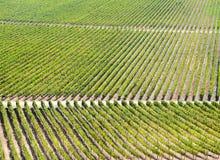 Rows of vineyard Stock Photos
