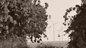 Rows of vineyard and wind turbines. In the background stock footage