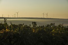 Rows of vineyard and wind turbines Royalty Free Stock Photo