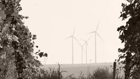 Rows of vineyard and wind turbines. In the foreground stock video footage