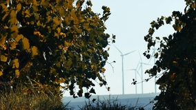 Rows of vineyard and wind turbines. In the foreground stock video