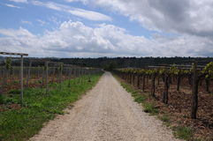 Rows of vineyards Royalty Free Stock Images