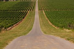Rows of vineyards Stock Photos