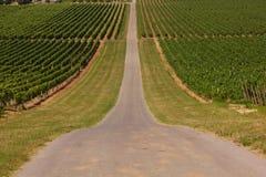 Rows of vineyards. Road near rows of vineyard (Ilok in Croatia stock photos