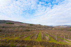 Rows of vineyards from Tuscany hills Royalty Free Stock Images
