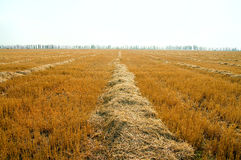 Rows of windrows Royalty Free Stock Images