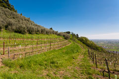 Rows of wine Royalty Free Stock Photography