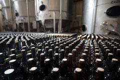 Rows of wine bottles in a winery Royalty Free Stock Photography