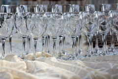 Rows of wine glasses Stock Image