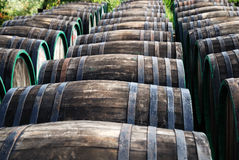 Rows of wine oak barrels lying Royalty Free Stock Photos